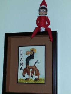 Riding a llama