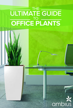 (adsbygoogle = window.adsbygoogle    []).push();   Choose Suitable Office Plants – Officials operating in their cubicles need to have not really feel undesirable about the atmosphere, now they can decorate their interiors with suitable flowering plants and lush green can...
