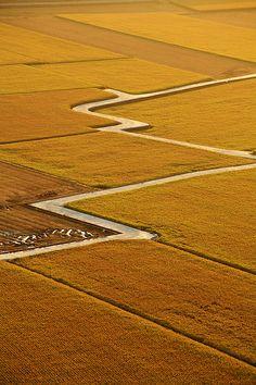 Rice Field, Taichung, Taiwan