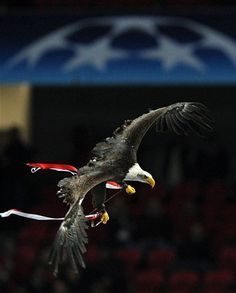 Benfica'nın maskotu kartal Vitoria, Luz Stadyumu'nda uçarken.