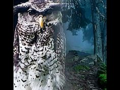 BELLA DONNA digital art - Hogwarts School Owl Art 12