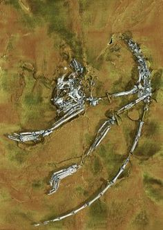 Discovery of oldest primate skeleton, ancestor of humans and apes