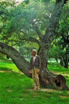 Jiddu Krishnamurti, Bukowski, Wizards, Plants, Frases, Flora, Plant, Planting
