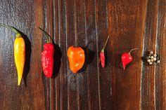 Descubra os 12 benefícios da pimenta para a dieta e para a saúde