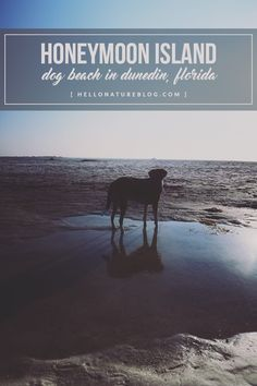 Honeymoon Island Dog
