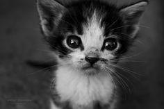 #kitten #black & white