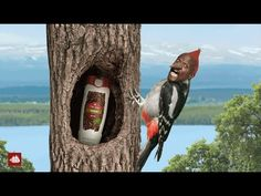 """(2/2) Old Spice: Make a Smellmitment. Old spices continues the ridiculous antics in this video. They are still using the big idea of """"Make of Smellmitment""""."""