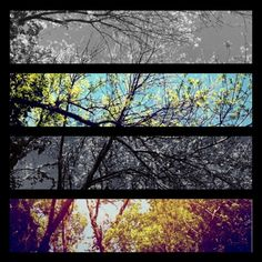 No matter how bad weather gets at any time of year, I need to remember that I love having four seasons.