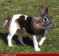 (2011-06) Dog + bunny = donny?