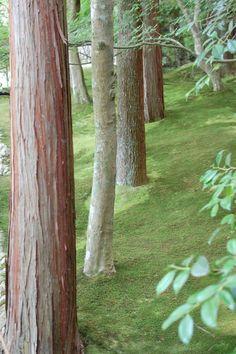 magical fairy moss garden #katequinnnursery