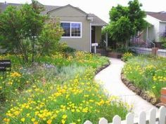 The lawn at this residence has been replaced with a Bunchgrass and wildflower meadow. Design and photo by Agi Kehoe.