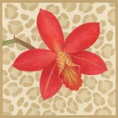 orchid-on-leopard