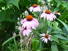 Death of a Stalker - Virily Interesting Short Stories, White Wedding Gowns, Till Death, Smile Face, Flowers, White Wedding Dresses, Florals, Flower, Bloemen