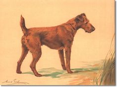 Image from http://prints.encore-editions.com/350/0/irish-terrier-1-by-maud-earl.jpg.