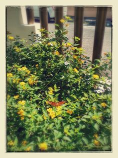 #Bellezanatural #Flores #Mariposa #MariposaMonarca #Floresdemijardin