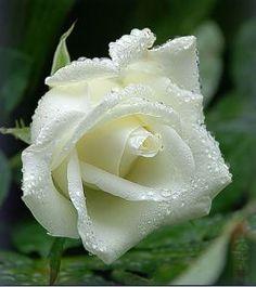 Foi para ti que criei as rosas. Foi para ti que lhes dei perfume. Para ti rasguei ribeiros e dei às romãs a cor do lume. Foi para ti que pus no céu a lua e o verde mais verde nos pinhais. Foi para …