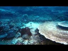 IMAX Under The Sea DiVERSiTY HD - Run Tim 40:52