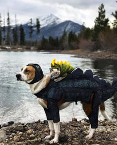 Henry the Colorado Dog now has a buddy to explore the great outdoors with