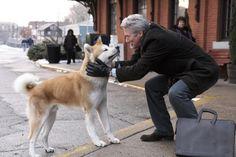 15 τηλεοπτικοί χαρακτήρες σκύλων που αγαπήθηκαν πολύ!