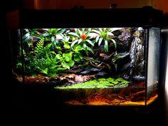 Your favourite Vivarium/Paludarium or other - Reptile Forums Aquarium Aquascape, Aquarium Setup, Aquascaping, Reptile Room, Reptile Cage, Reptile Enclosure, Vivarium, Red Eyed Crocodile Skink, Frog Habitat