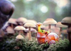 snail-photography-gabi-stickler-4