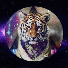 Coque iPhone 5 et Tigre Swag - Mobile-Store Hipster Wallpaper, Animal Wallpaper, Galaxy Wallpaper, Wallpaper Backgrounds, Tiger Wallpaper, Phone Backgrounds, Iphone Wallpapers, Animals Tumblr, Cats Tumblr