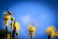 029 Kirstenbosch