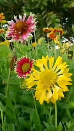 Amazing Flowers, Blue Flowers, Beautiful Flowers, Beautiful Moon, Delphinium Plant, Blue Delphinium, Pansies, Daffodils, Flower Wallpaper