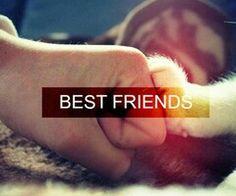 Mans bestfriend