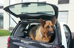 My baby Blitz in his dad's boss' Fortwo. I wish the photographer had captured the entire car in the picture :\ May '15.