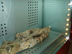 Mummy of San Andrés, in the Museo de la Naturaleza y el Hombre (Tenerife, Canary Islands).
