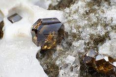 Anatase - Binn Valley, Wallis, Switzerland Minerals And Gemstones, Crystals Minerals, Rocks And Minerals, Coral Stone, Life Form, Rocks And Gems, Gem Stones, Fossils, Honeycomb