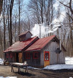 cabane-a-sucre-bois-de-pin Little Cabin, Little Houses, Country Farm, Country Life, Barns Sheds, Wood Shed, Maple Tree, Mountain Homes, Old Barns