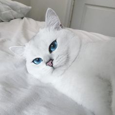 Zoolander 2 came out on February 10th, but it seems that Ben Stiller has nothing on Coby the British Shorthair cat, whose Blue Steel good looks have garnered over 200,000 likes on Instagram. Just look into Coby's eyes, then look into Ben Stiller's; who's the real beauty here?