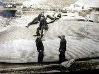 buceasinmojarte.com: La factoría ballenera de Caneliñas