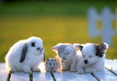 All so adorable! Bunny, hamster, kitty, and puppy <3