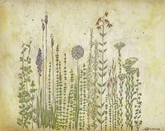 "Prairie Wildflowers - 8""x10"" - From My Original Illustration. $13.50, via Etsy."
