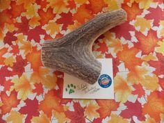 Jumbo Elk Antler Dog Chew Lot 6072 by WildandWooleyTreats on Etsy