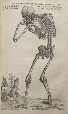 Vesalius - the world's most beautiful medical illustrations