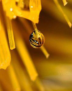 Water Drop Photography #photography #waterdropphotography #dropreflection