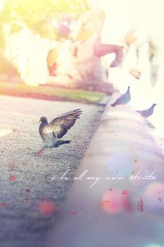 #Bird #Vogel #fliegen #fallen #setzen #Mannheim #Natur #Tiere