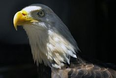 Peace River Wildlife Center - Punta Gorda, Florida