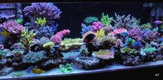 JP's 240. A decade of work. - Page 28 - Reef Central Online Community