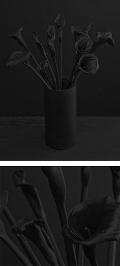 Corolla: Photo Series by Daniel Seung Lee