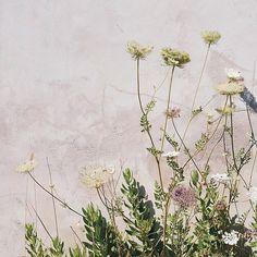 """Mi piace"": 4,024, commenti: 28 - Olivia Thébaut (@oliviathebaut) su Instagram: ""Beautiful colors in Ramatuelle"""