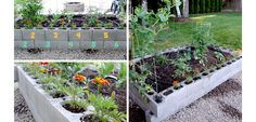 Cinder Block Planter Box - DIY Low Budget Garden Ideas for Summer - Click for Tutorial
