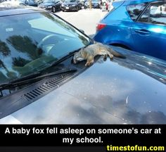 41 funny animal pictures with captions. Funny animal pictures of cats and dogs and other funny animals. Funny Animal Pictures, Cute Funny Animals, Cute Baby Animals, Funny Cute, Animals And Pets, Cute Pictures, Fluffy Animals, Random Pictures, Beautiful Pictures