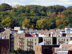 Apartment houses and trees in Inwood, Manhattan.
