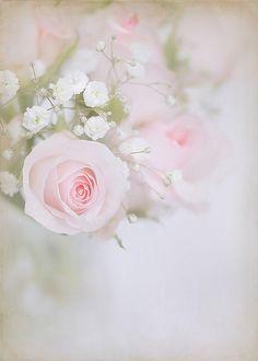 Super Ideas For Vintage Pink Roses Flowers Decoupage Rose Pastel, Pastel Flowers, Pretty Pastel, Pretty Flowers, Pale Pink, Shabby Flowers, Pink Yellow, Deco Floral, Arte Floral