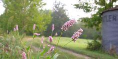 Missouri Wildflower Guide